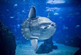 Parkings Aquarium de Lisbonne à Lisboa - Réservez au meilleur prix
